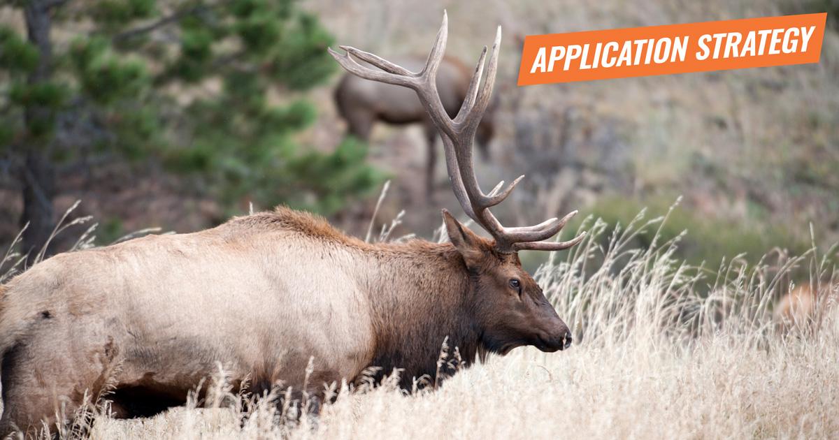 Best Elk Hunting Season Colorado - Outdoors Geek