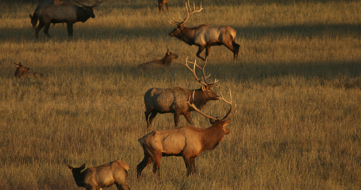 Supreme Court rules in favor of Native American elk hunter hunting  out of season