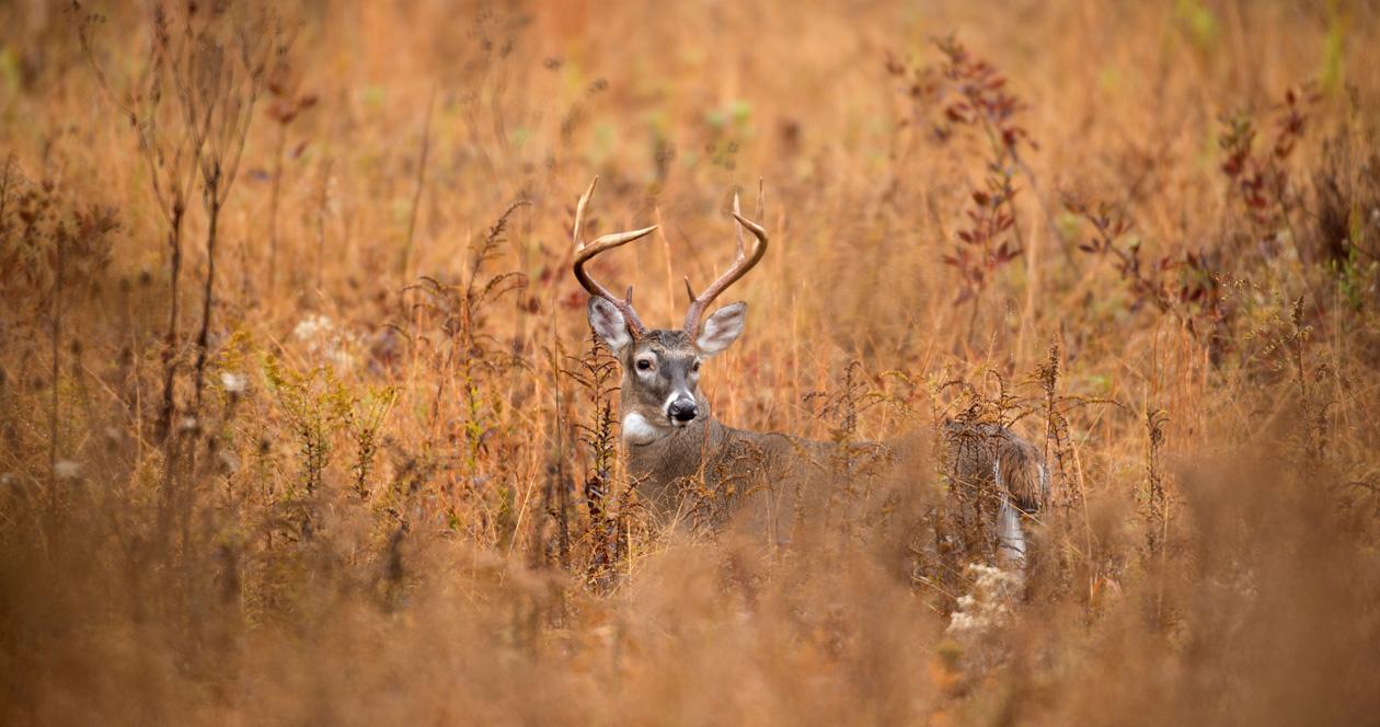 New deer baiting regulations in South Carolina