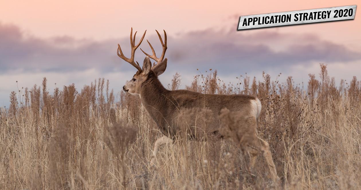 APPLICATION STRATEGY 2020: Utah Mule Deer