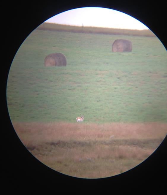 Antelope digiscope photo 2