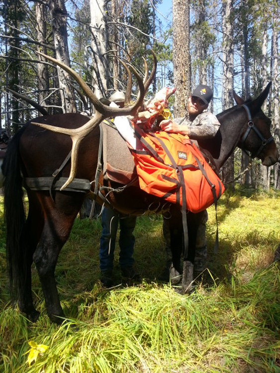 Packing out the third bull elk