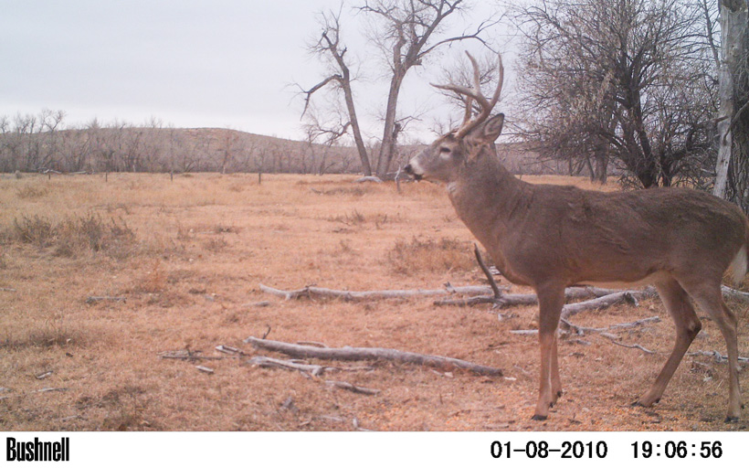 2014 photo of building history with a buck on trail camera