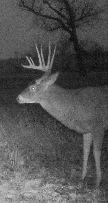 2015 photo of building history with a buck on trail camera