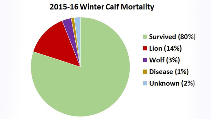 2015-16 Winter Calf Mortality