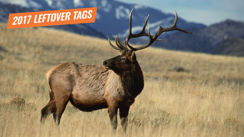 2017 Montana leftover elk tags now available
