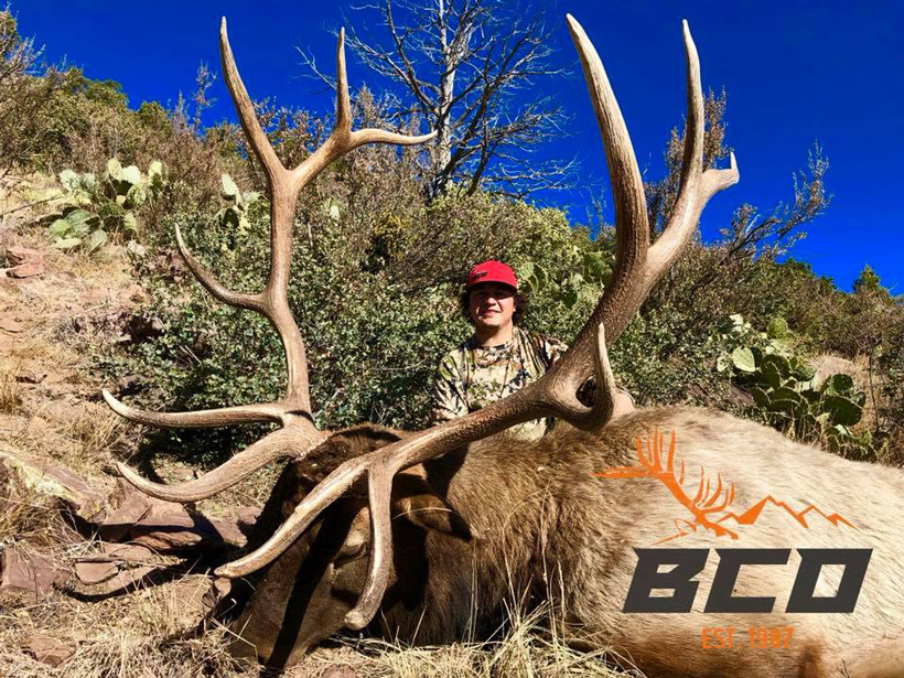 2017 limited opportunity Arizona bull elk taken by Big Chino Outfitters