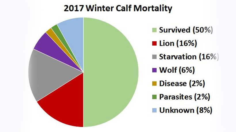 2017 Calf Mortality