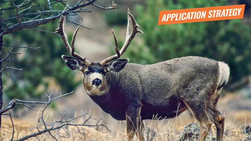 2018 Arizona deer sheep bison application strategy article