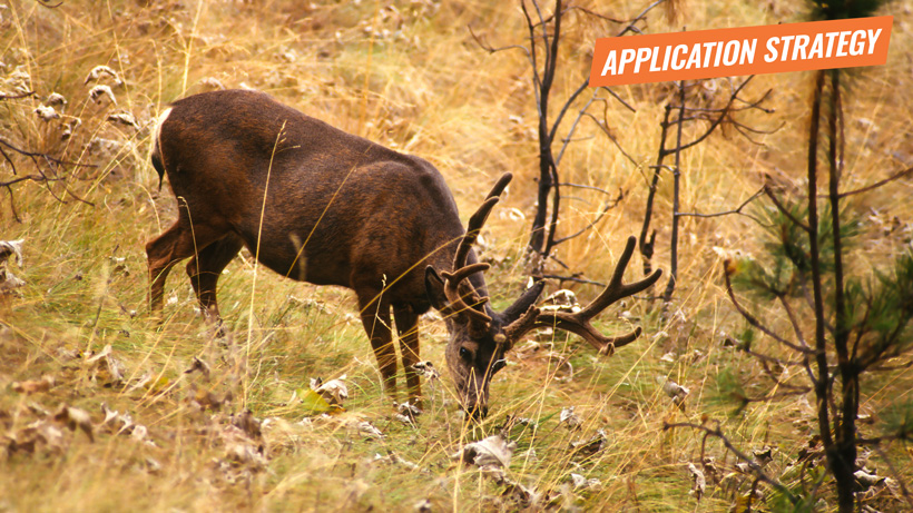 2018 California deer and antelope application strategy article