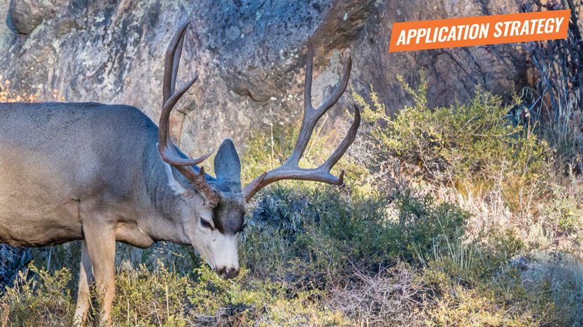2018 Colorado deer application strategy article