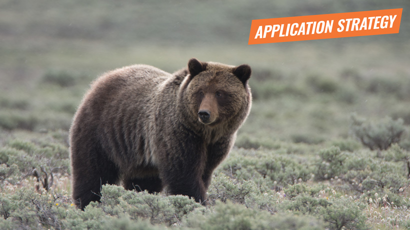 2018 Idaho and Wyoming grizzly bear application strategy article