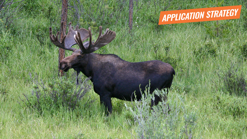 2018 Idaho sheep moose goat application strategy article