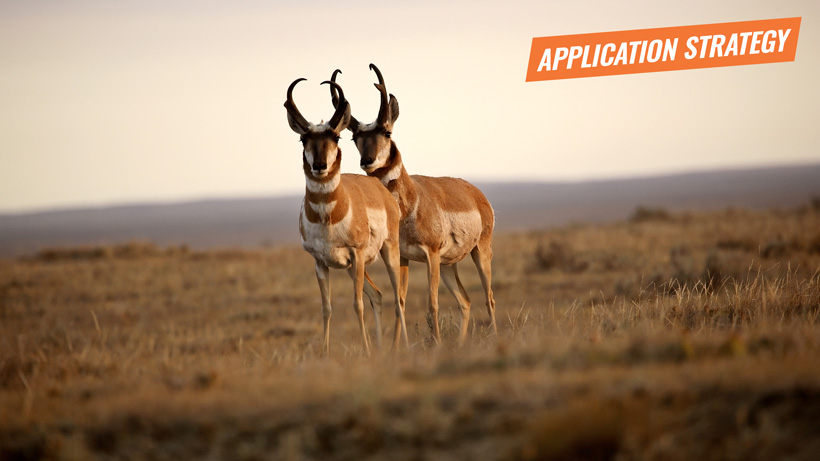 2018 Montana antelope application strategy article