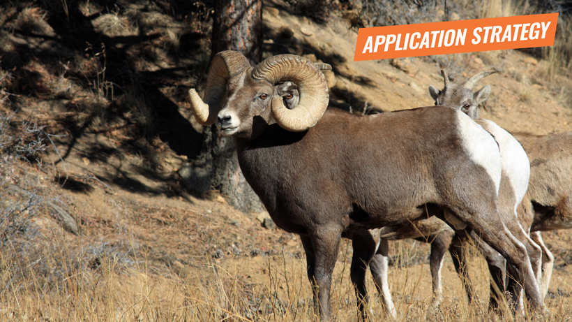 2018 Montana sheep moose goat application strategy article