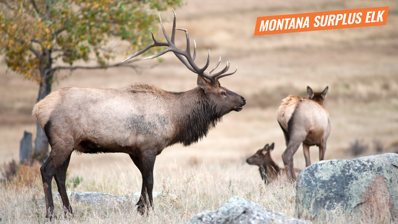 2018 Montana surplus elk licenses