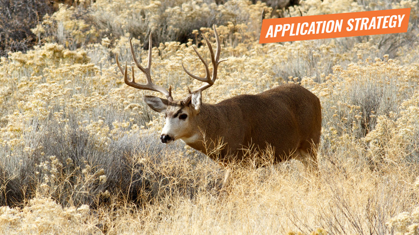 2018 Nevada mule deer application strategy article