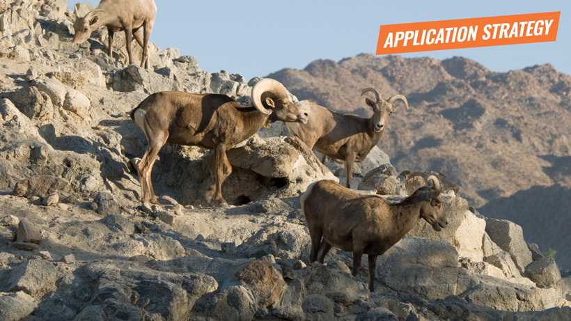 2018 Nevada sheep mountain goat application strategy article