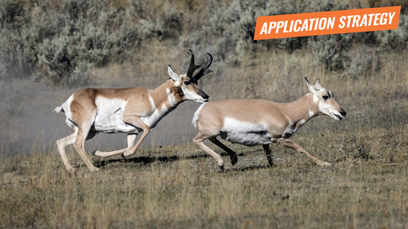 2018 New Mexico antelope and exotic species application strategy article