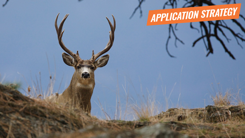 2018 New Mexico deer application strategy article