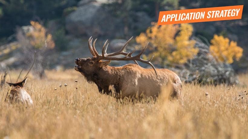 2018 New Mexico elk application strategy article