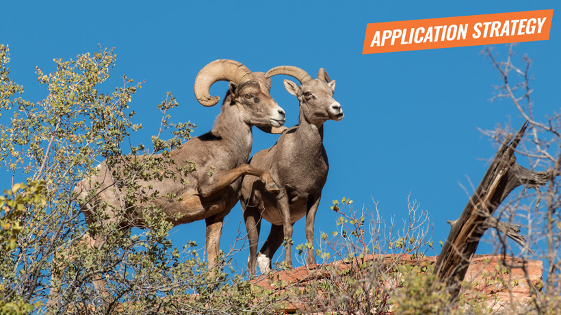 2018 New Mexico sheep application strategy article