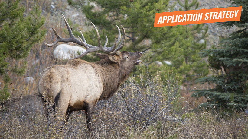 2018 Oregon elk and antelope application strategy article