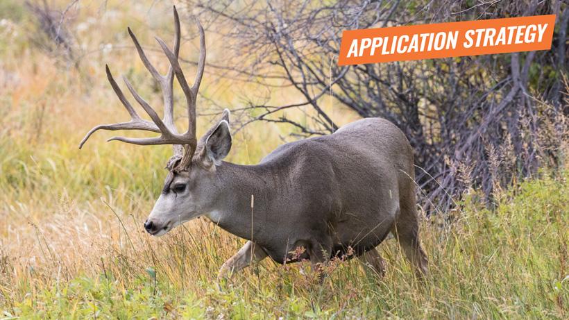 2018 Utah deer application strategy article