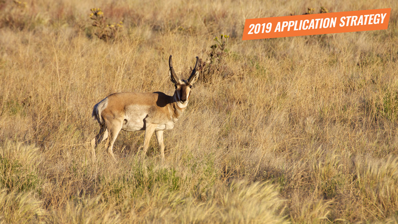 2019 Arizona antelope application strategy article