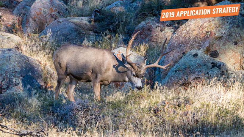 2019 Arizona deer sheep bison application strategy