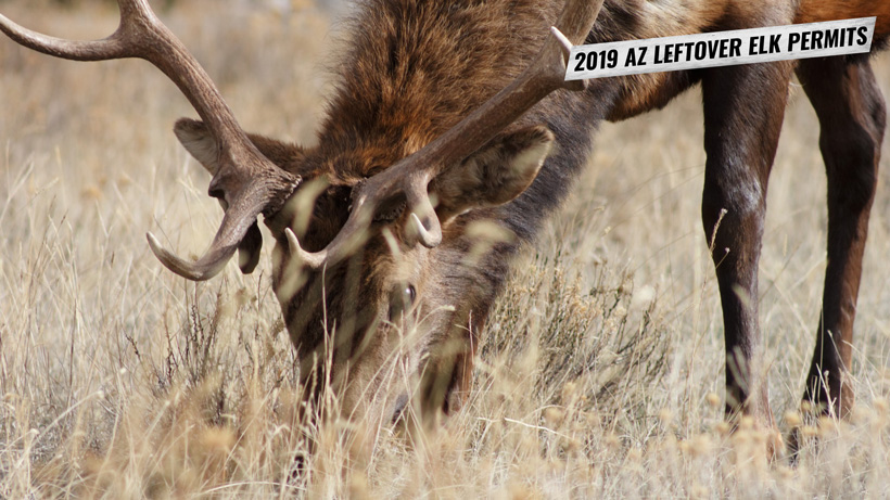 2019 Arizona leftover elk permits