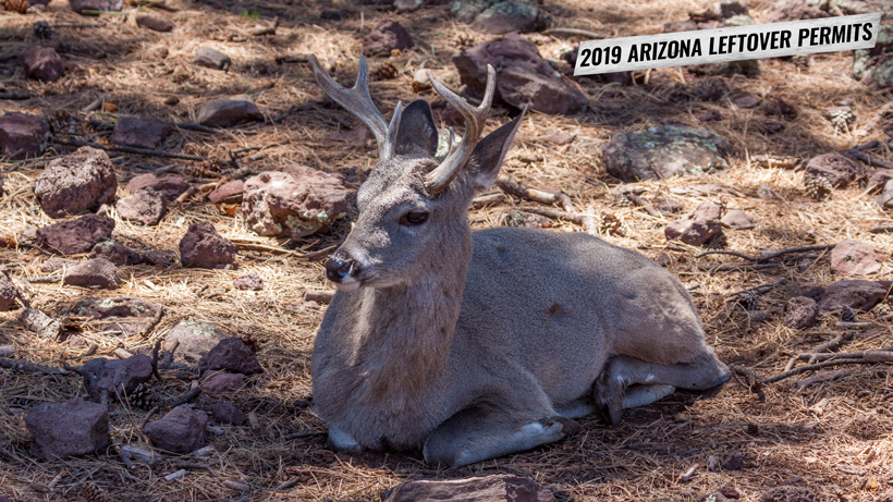 2019 Arizona leftover hunting permit list