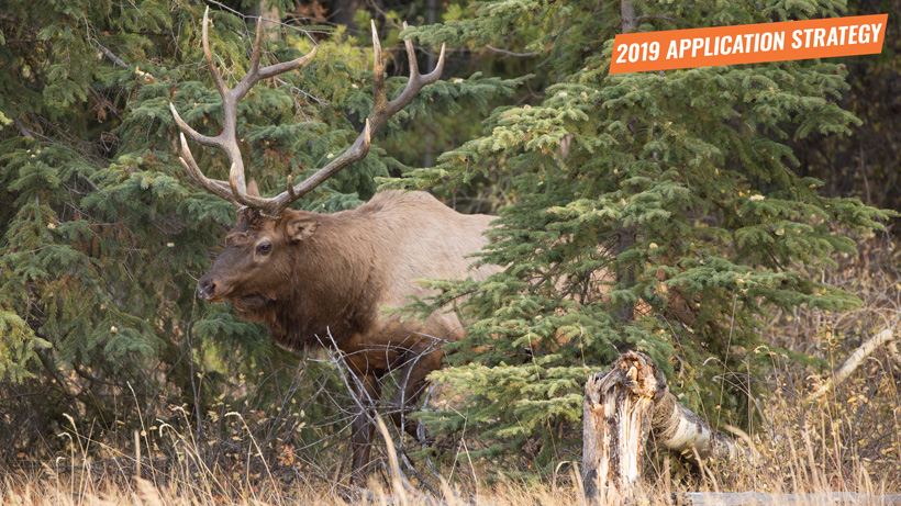 2019 Colorado elk and antelope application strategy article