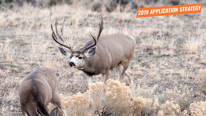 2019 Colorado mule deer application strategy