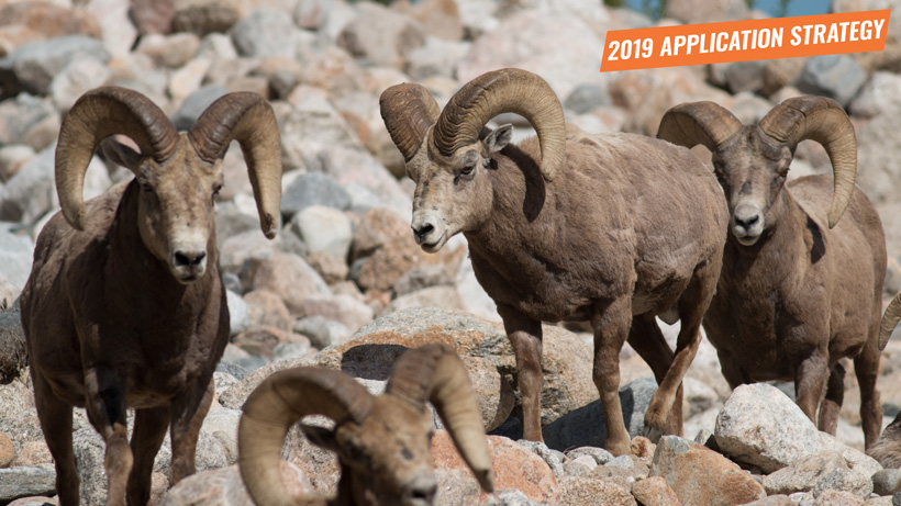 2019 Colorado sheep moose mountain goat application strategy article