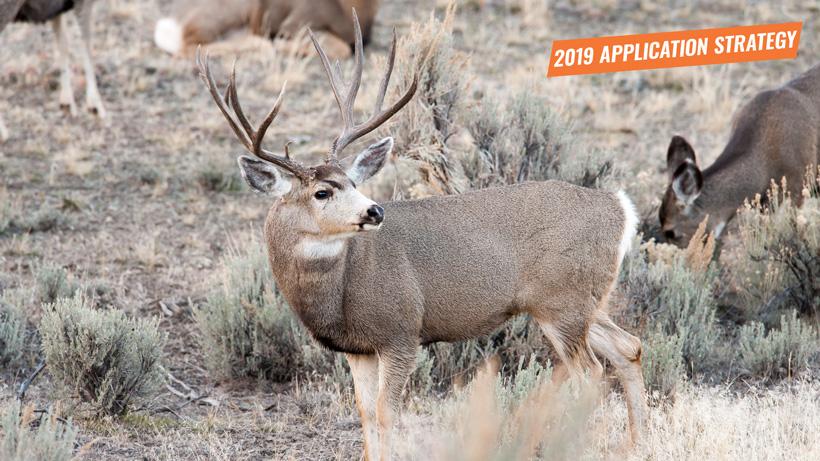 2019 Idaho mule deer application strategy