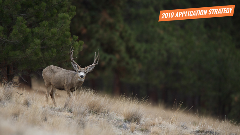 2019 Montana deer application strategy article