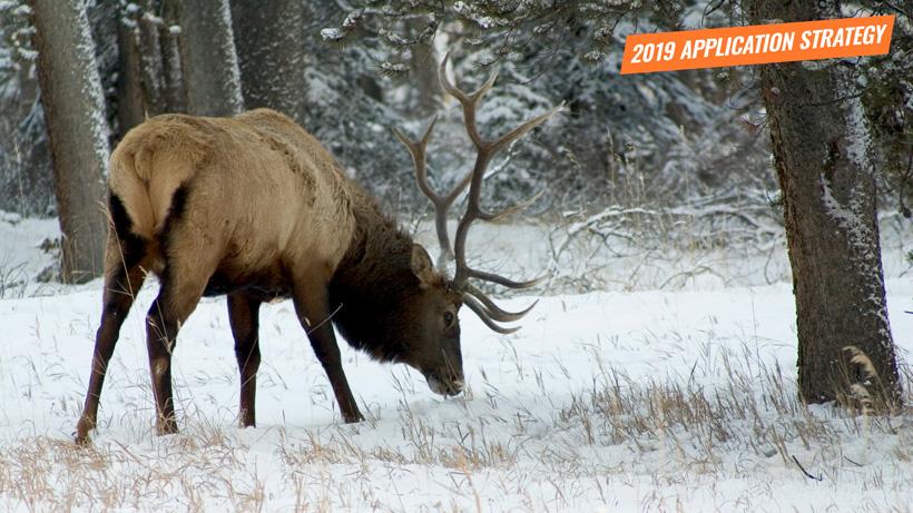 2019 Montana elk application strategy article