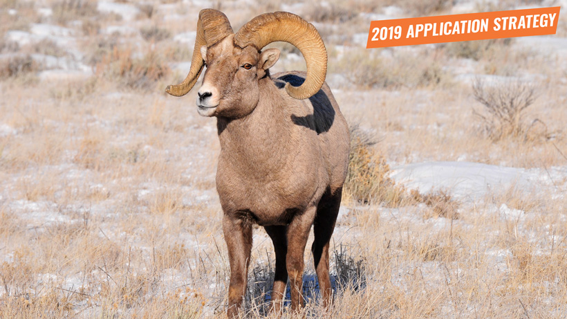 2019 Montana sheep moose goat bison application strategy