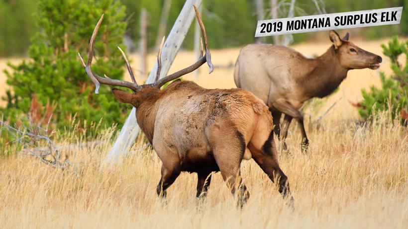 2019 Montana surplus elk licenses
