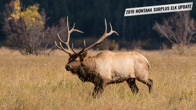 2019 Montana surplus elk tag update