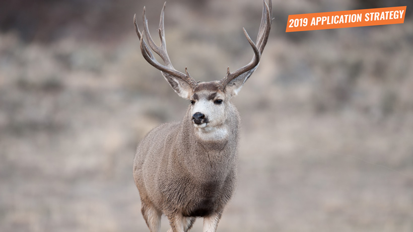 2019 Nevada deer application strategy