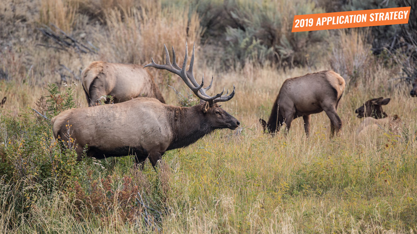 2019 Nevada elk and antelope app strategy