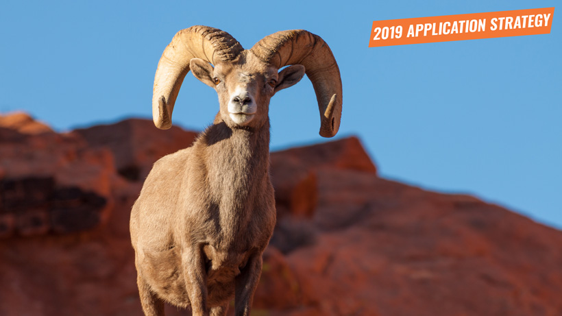 2019 Nevada sheep and mountain goat application strategy article