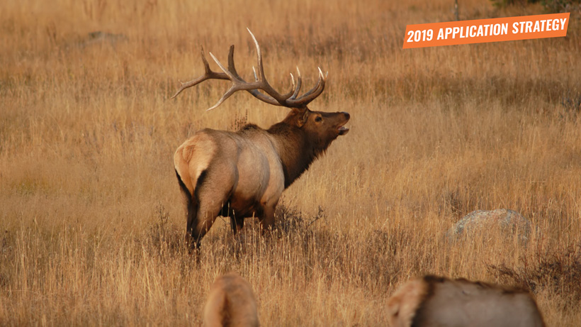 2019 New Mexico elk and deer application strategy article