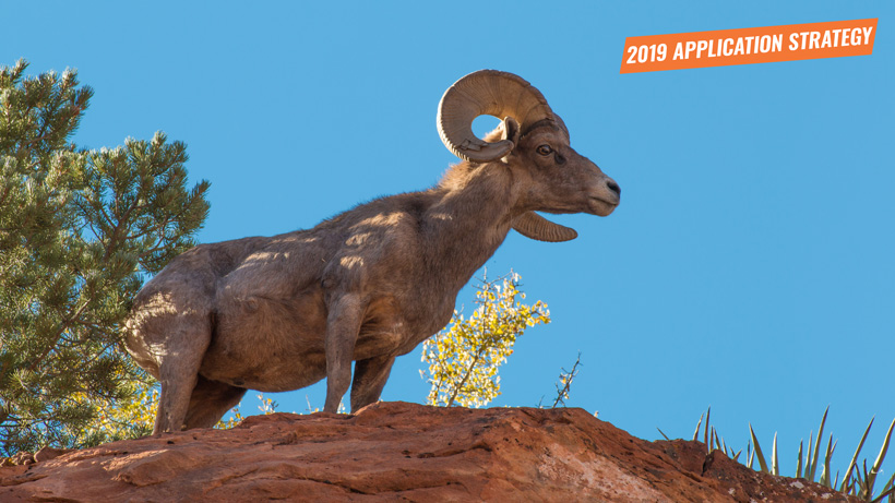 2019 New Mexico sheep and antelope application strategy article