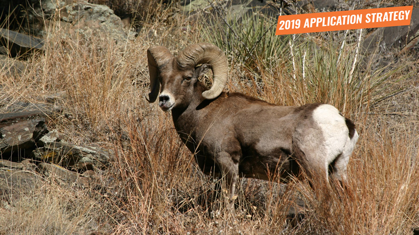 2019 Oregon sheep and mountain goat application strategy article
