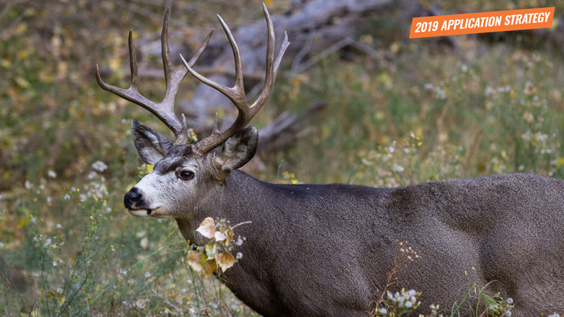 2019 Utah Mule Deer Application Strategy Article