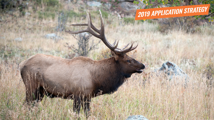 2019 Utah elk and antelope application strategy article