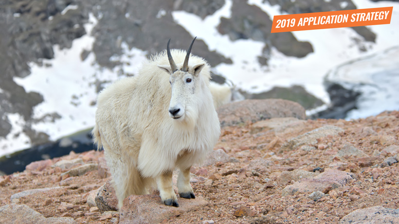 2019 Utah moose sheep goat bison application strategy article